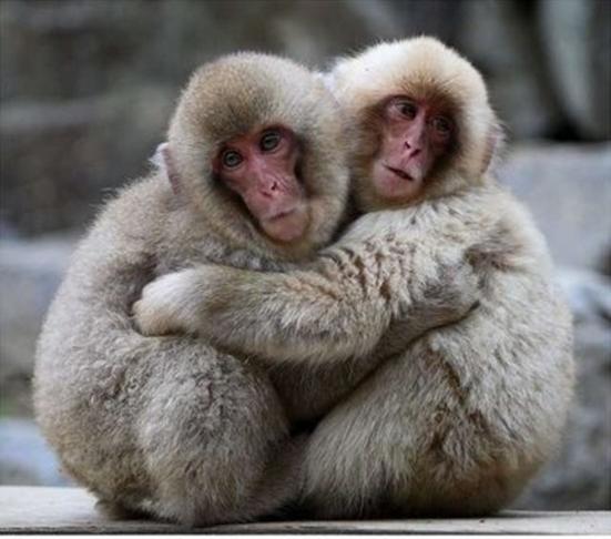 Bonding Monkeys