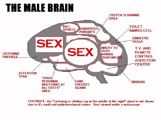 The Male Brain!