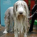 Ice Water - Dog Training